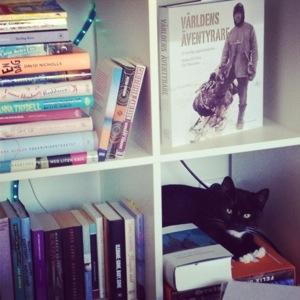 morris i bokhyllan malinthewriter